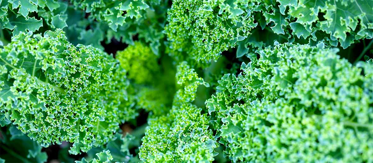 Green leafy vegetables are high in Magnesium
